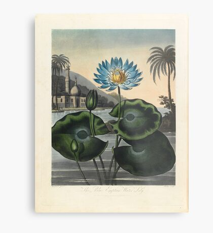 Botanical illustration: Blue Egyptian water lily by Robert Thornton – State Library Victoria Metal Print