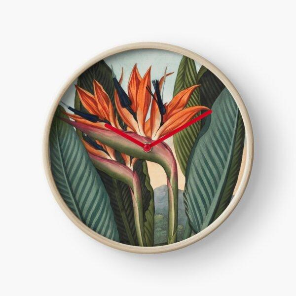 Botanical illustration: Bird of Paradise (Strelitzia) – State Library Victoria Clock