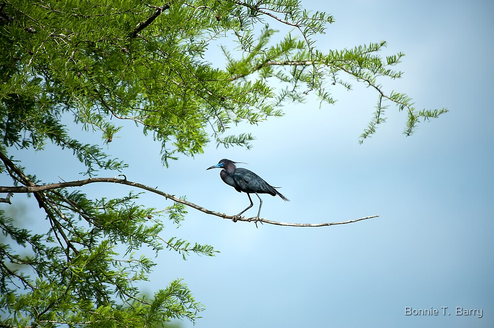 Walking the tightrope by Bonnie T.  Barry