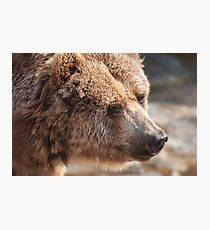 bear in the forest Photographic Print