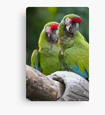 ara macaw parrot on its perch Canvas Print