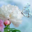 Peony & Butterfly by Morag Bates
