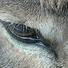 Eye of the beast by Vanessa Combes