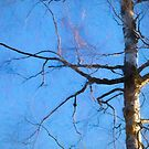 birch by Barry W  King
