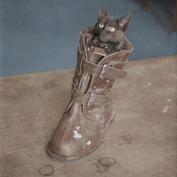 Finnish Air Force pet cat in a boot, Joensuu, 1942 by cassowaryprods