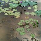 Pond with lily pads and lotus flowers by cocodesigns