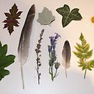 Leaves, feathers and flowers by cocodesigns