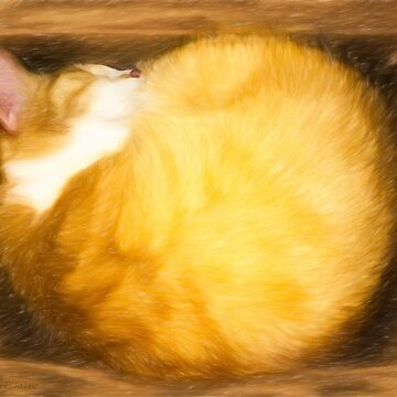 Orange Tabby Cat Art - Cat Sleeping In A Box by marksda1