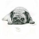 Pug by Nori Bucci