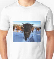 Scottish Highland Cattle Calf 1670 Unisex T-Shirt