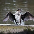 The Flasher! by dougie1