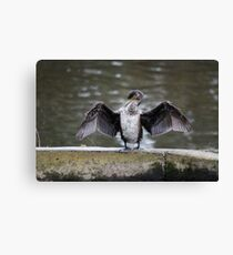The Flasher! Canvas Print