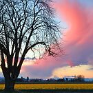 Skagit Valley Sunset by Barb White