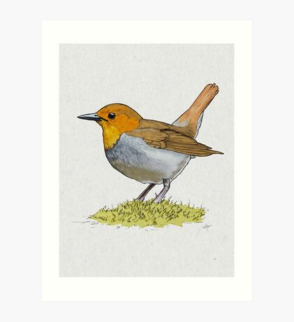 Japanese Robin Art Print