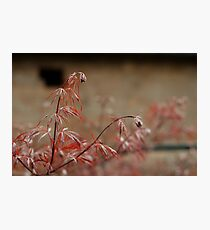 Red Plant Photographic Print