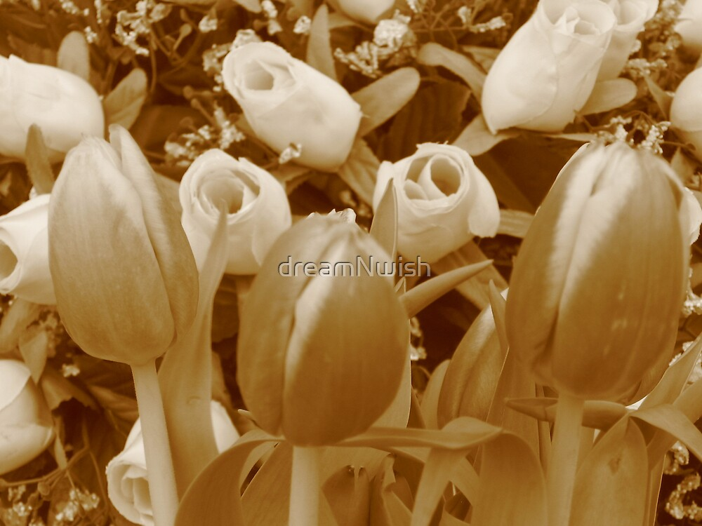 Tulips and Roses in Sepia by dreamNwish