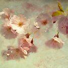 cherry love by lucyliu