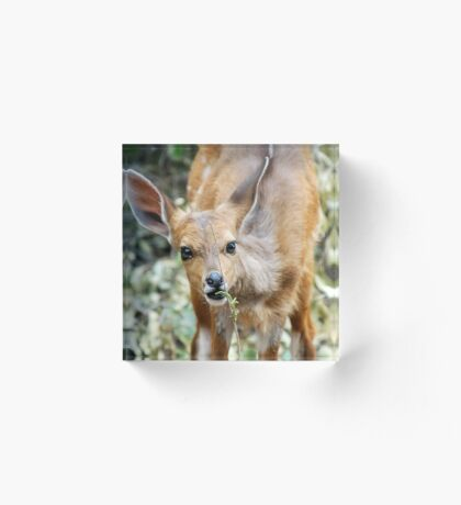 THIS IS NICE - THE BUSHBUCK - Tragelaphus scriptus Acrylic Block