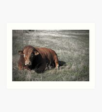 Bull in a field Art Print