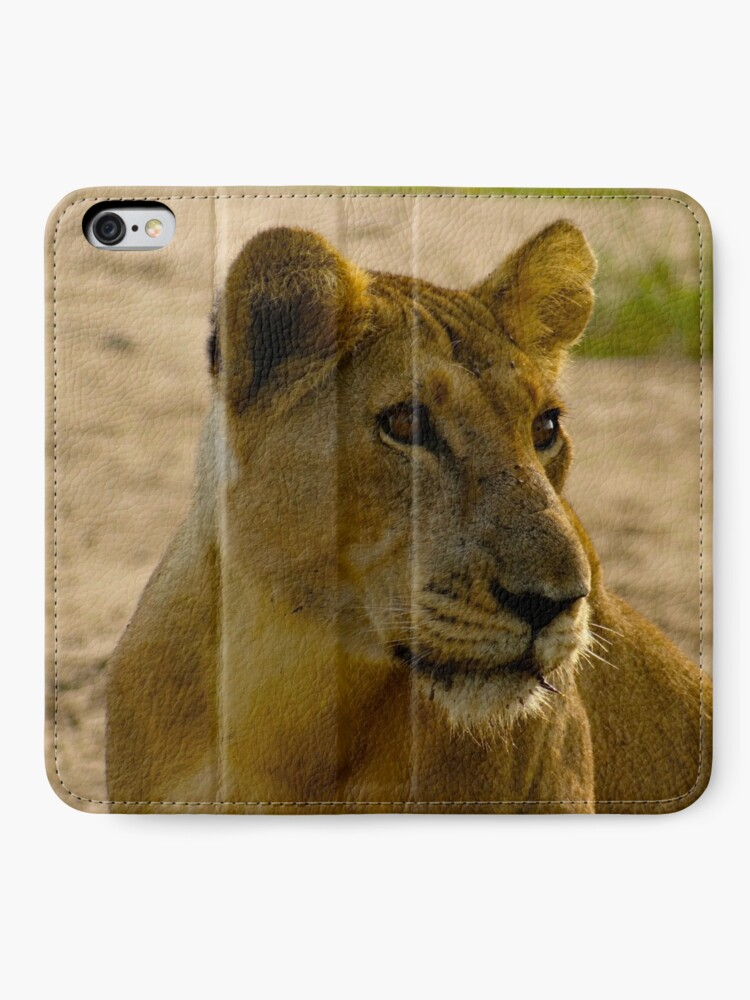 Alternate view of pregnant lioness relaxed iPhone Wallet