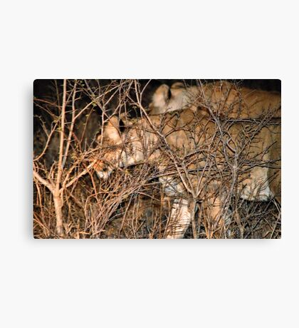 THE FEMALES AND THE HUNT Canvas Print