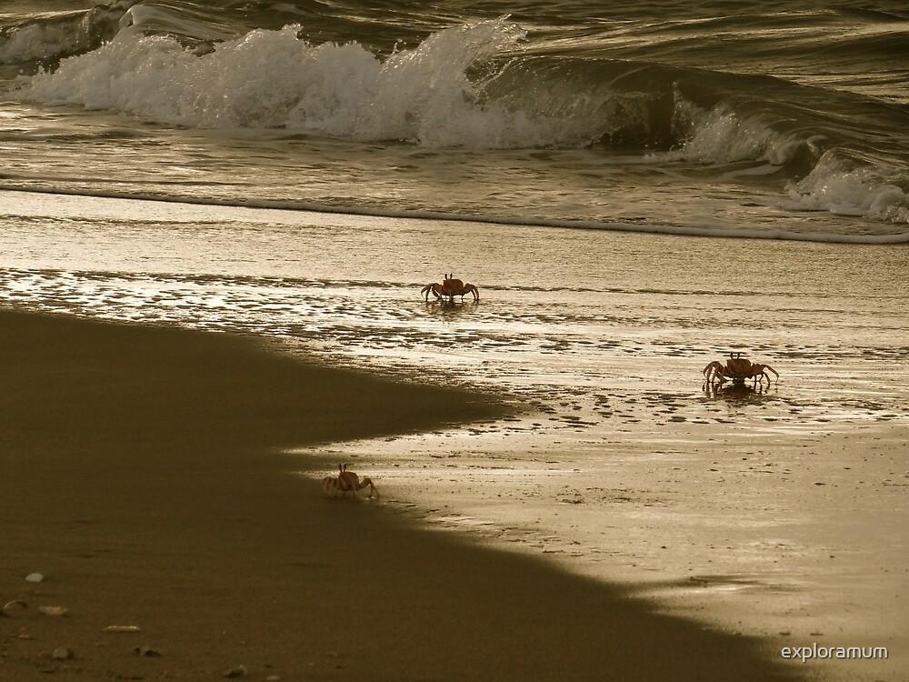 Lamu Island - crabs playing at sunset 5 by exploramum