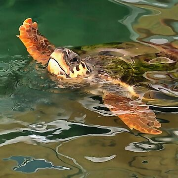 Hands Up For A Plastic Free Ocean Loggerhead Turtle by taiche