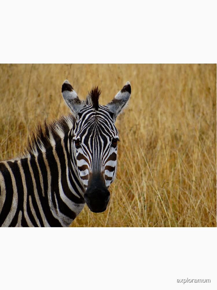 Zebra half shot face on by exploramum