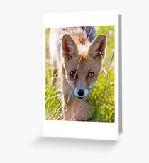 Young and curious fox Greeting Card