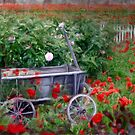 The Poppy Cart by Carolyn Staut