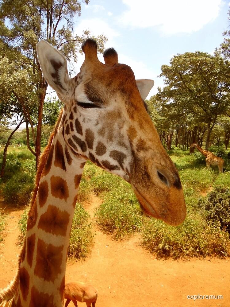 Giraffe getting personal 7 by exploramum