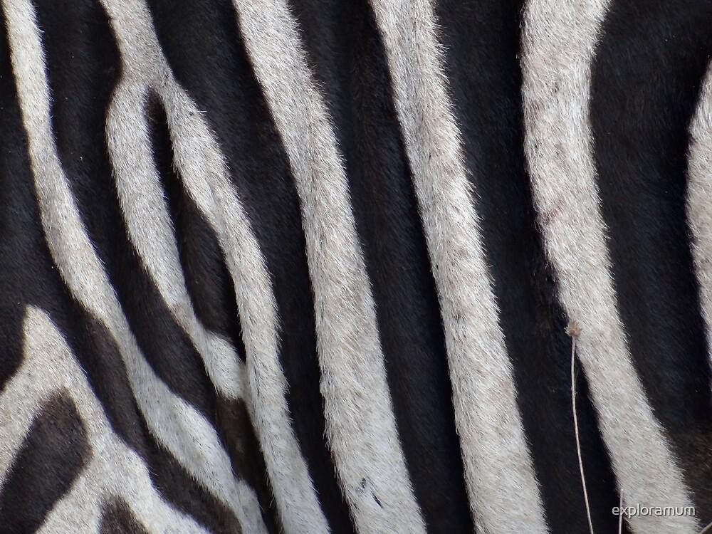Zebra skin closeup by exploramum