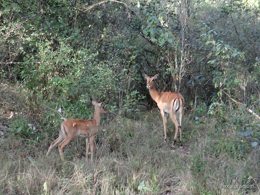 Africa - Animals in the wild 3 by exploramum