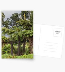 Tasmanian Tree Ferns Postcards