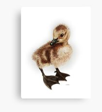 Canadian Gosling - cute baby goose Canvas Print