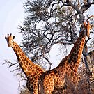 "MR & MRS "" V "" by Magriet Meintjes"