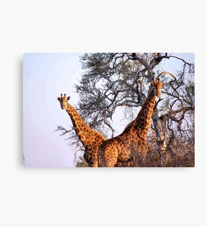 "MR & MRS "" V "" Canvas Print"
