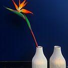 Strelitzia flower by Bruno Beach