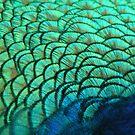 Peacock by starbucksgirl26
