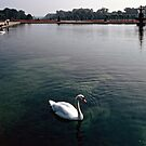 Swans on top lake Fontainbleu France 19840829 0005  by Fred Mitchell