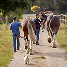 Clydesdales 08 by Yanni