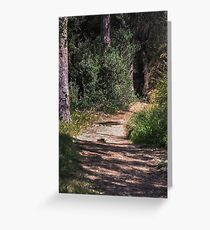 Into The Woods At Presidio Park, California, USA Greeting Card