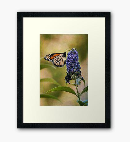 Monarch auf Schmetterlingsbusch Gerahmtes Wandbild