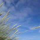 Wild Grasses and Blue Sky - Western Isles, Scotland von BlueMoonRose