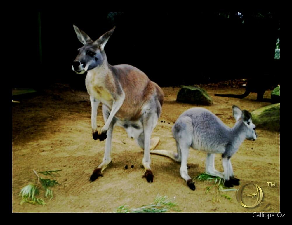 Kangaroos by Calliope-Oz