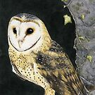 The Church Owl by alexandradawe