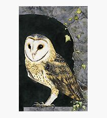 The Church Owl Photographic Print