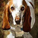 Hound Dog by Jerri Johnson