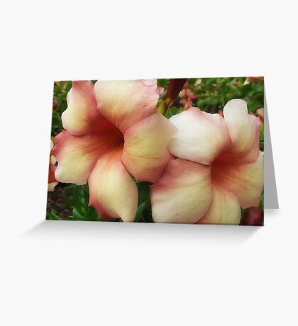 """Jamaican Sunset"" Greeting Card"