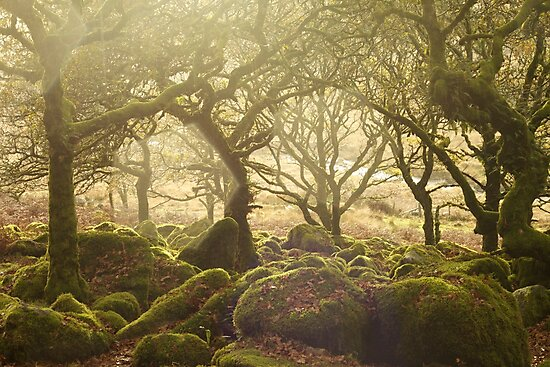 Wistman's Wood by bethan19